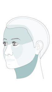 Die vier Gesichtsregionen: Wange, Hals, Stirn, Mittelgesicht